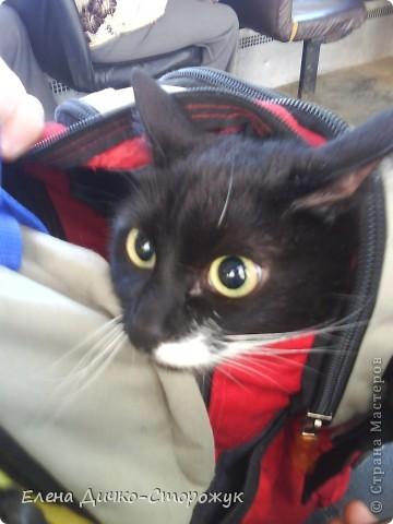 Так дочка везла впервые нашу кошку на дачу фото 4