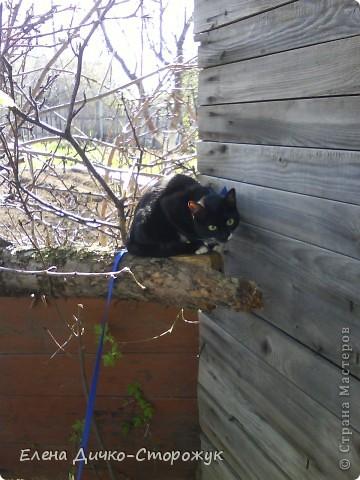 Так дочка везла впервые нашу кошку на дачу фото 6