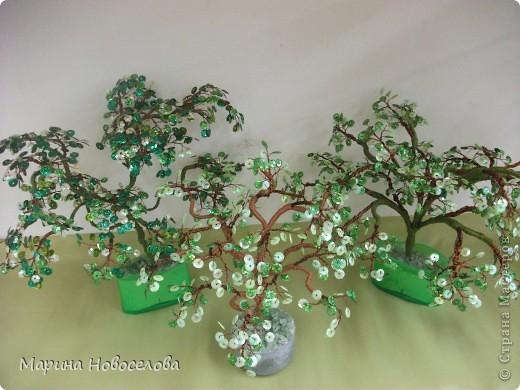 Деревья фото 29