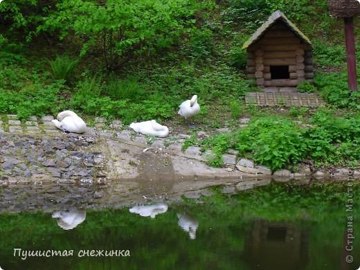 Белый кролик. фото 20