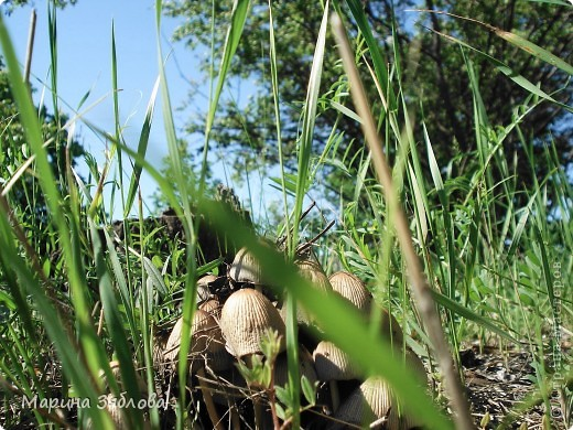 Хочу пригласить Вас посетить Таирово весной . У нас здесь очень красиво ! Большие парки , свежий воздух , и как красиво поют птицы ! фото 13