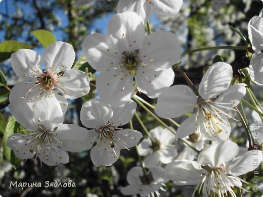 Хочу пригласить Вас посетить Таирово весной . У нас здесь очень красиво ! Большие парки , свежий воздух , и как красиво поют птицы ! фото 12