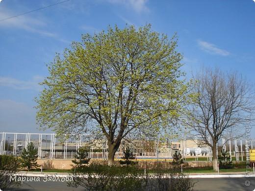 Хочу пригласить Вас посетить Таирово весной . У нас здесь очень красиво ! Большие парки , свежий воздух , и как красиво поют птицы ! фото 2