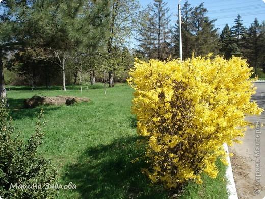 Хочу пригласить Вас посетить Таирово весной . У нас здесь очень красиво ! Большие парки , свежий воздух , и как красиво поют птицы ! фото 8