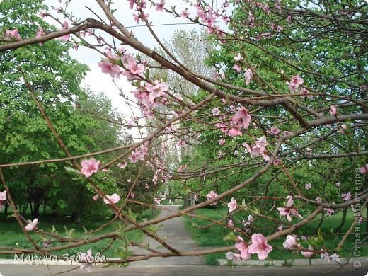 Хочу пригласить Вас посетить Таирово весной . У нас здесь очень красиво ! Большие парки , свежий воздух , и как красиво поют птицы ! фото 19