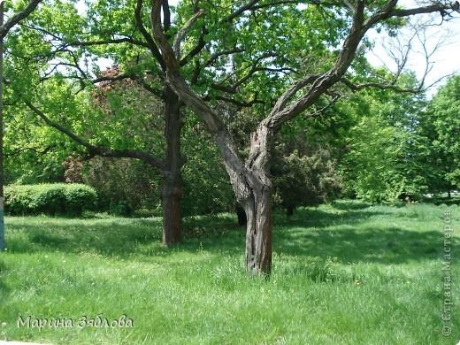 Хочу пригласить Вас посетить Таирово весной . У нас здесь очень красиво ! Большие парки , свежий воздух , и как красиво поют птицы ! фото 20