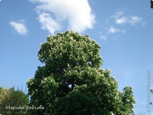Хочу пригласить Вас посетить Таирово весной . У нас здесь очень красиво ! Большие парки , свежий воздух , и как красиво поют птицы ! фото 26