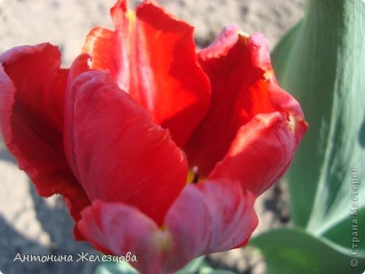 Пробую создать солнечное,  радостное весеннее настроение. фото 12