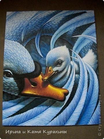 лебеди фото 4