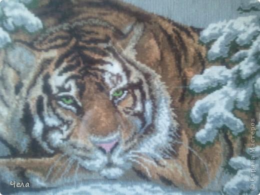 Вышивка Амурский тигр