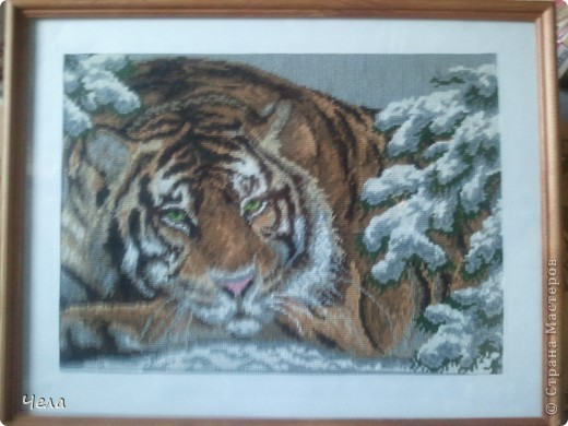 Амурский тигр в рамке... фото 1