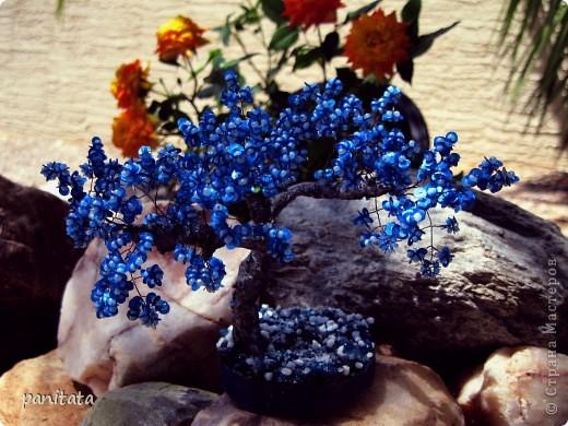 Голубая сакура, мокрый снег