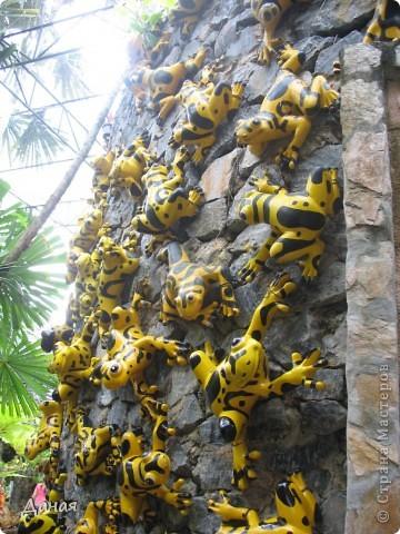 История парка, занесенного в книгу рекордов Гиннеса, и на экскурсию в который я вас приглашаю, началась в 1954 году, когда одна обеспеченная тайская семья купила участок земли в межгорной долине провинции Чанбури площадью 520 га. Сначала здесь разбили плодовый сад, выращивали манго, апельсины, кокосы и многое другое. Хозяйку сада звали Нонг Нуч. Спустя 16 лет она путешествовала по Европе и, вернувшись в родные края, решила превратить свой фруктовый сад в шикарный тропический парк. Трудом множества садовников участок был превращен в вечноцветущий сад, который в 1980 году открылся для широкого посещения.  фото 12