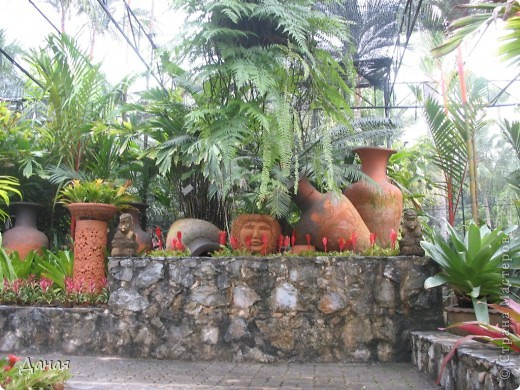 История парка, занесенного в книгу рекордов Гиннеса, и на экскурсию в который я вас приглашаю, началась в 1954 году, когда одна обеспеченная тайская семья купила участок земли в межгорной долине провинции Чанбури площадью 520 га. Сначала здесь разбили плодовый сад, выращивали манго, апельсины, кокосы и многое другое. Хозяйку сада звали Нонг Нуч. Спустя 16 лет она путешествовала по Европе и, вернувшись в родные края, решила превратить свой фруктовый сад в шикарный тропический парк. Трудом множества садовников участок был превращен в вечноцветущий сад, который в 1980 году открылся для широкого посещения.  фото 18
