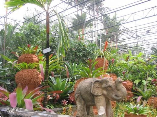 История парка, занесенного в книгу рекордов Гиннеса, и на экскурсию в который я вас приглашаю, началась в 1954 году, когда одна обеспеченная тайская семья купила участок земли в межгорной долине провинции Чанбури площадью 520 га. Сначала здесь разбили плодовый сад, выращивали манго, апельсины, кокосы и многое другое. Хозяйку сада звали Нонг Нуч. Спустя 16 лет она путешествовала по Европе и, вернувшись в родные края, решила превратить свой фруктовый сад в шикарный тропический парк. Трудом множества садовников участок был превращен в вечноцветущий сад, который в 1980 году открылся для широкого посещения.  фото 19