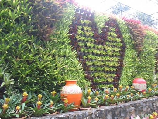 История парка, занесенного в книгу рекордов Гиннеса, и на экскурсию в который я вас приглашаю, началась в 1954 году, когда одна обеспеченная тайская семья купила участок земли в межгорной долине провинции Чанбури площадью 520 га. Сначала здесь разбили плодовый сад, выращивали манго, апельсины, кокосы и многое другое. Хозяйку сада звали Нонг Нуч. Спустя 16 лет она путешествовала по Европе и, вернувшись в родные края, решила превратить свой фруктовый сад в шикарный тропический парк. Трудом множества садовников участок был превращен в вечноцветущий сад, который в 1980 году открылся для широкого посещения.  фото 28