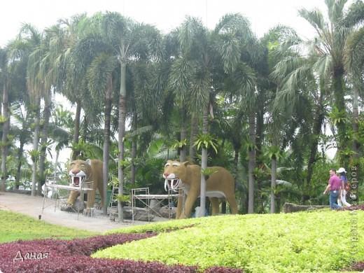 История парка, занесенного в книгу рекордов Гиннеса, и на экскурсию в который я вас приглашаю, началась в 1954 году, когда одна обеспеченная тайская семья купила участок земли в межгорной долине провинции Чанбури площадью 520 га. Сначала здесь разбили плодовый сад, выращивали манго, апельсины, кокосы и многое другое. Хозяйку сада звали Нонг Нуч. Спустя 16 лет она путешествовала по Европе и, вернувшись в родные края, решила превратить свой фруктовый сад в шикарный тропический парк. Трудом множества садовников участок был превращен в вечноцветущий сад, который в 1980 году открылся для широкого посещения.  фото 45