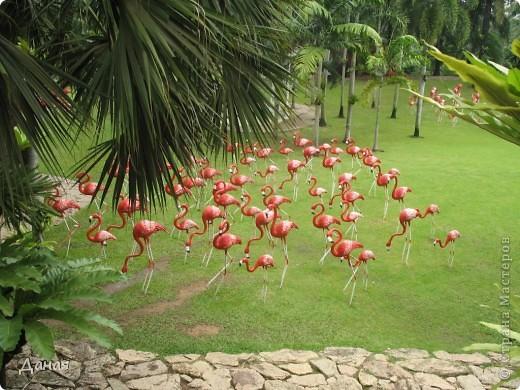 История парка, занесенного в книгу рекордов Гиннеса, и на экскурсию в который я вас приглашаю, началась в 1954 году, когда одна обеспеченная тайская семья купила участок земли в межгорной долине провинции Чанбури площадью 520 га. Сначала здесь разбили плодовый сад, выращивали манго, апельсины, кокосы и многое другое. Хозяйку сада звали Нонг Нуч. Спустя 16 лет она путешествовала по Европе и, вернувшись в родные края, решила превратить свой фруктовый сад в шикарный тропический парк. Трудом множества садовников участок был превращен в вечноцветущий сад, который в 1980 году открылся для широкого посещения.  фото 48