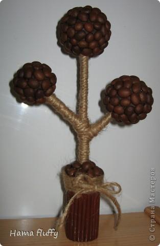 еще одно кофейное деревце
