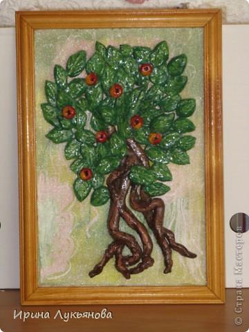 Яблоня. фото 1