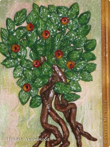 Яблоня. фото 2