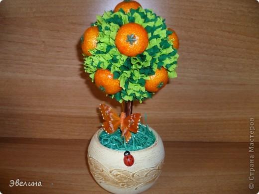 вот такой фруктовый сад я вырастила :о) фото 5