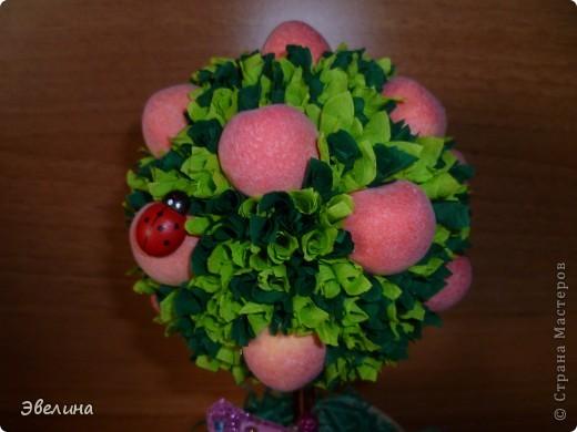 вот такой фруктовый сад я вырастила :о) фото 7