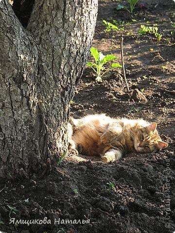 Я на солнышке лежу! И на солнышко гляжу! фото 1