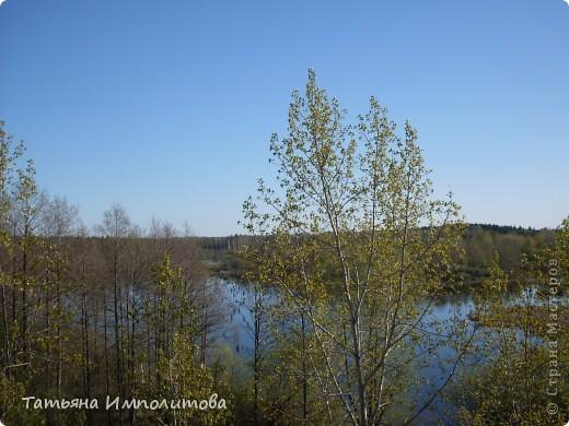 Не часто встретишь на Урале миндаль,а такое чудо я вообще видела первый раз! фото 12