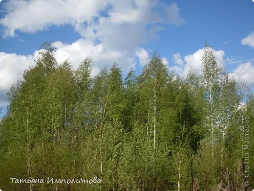 Не часто встретишь на Урале миндаль,а такое чудо я вообще видела первый раз! фото 15