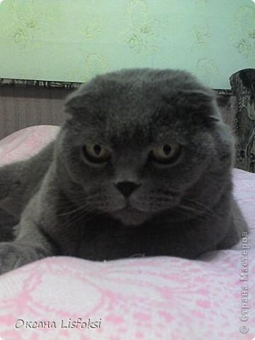 Этого котика зовут Умка.  фото 6
