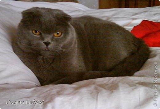 Этого котика зовут Умка.  фото 3