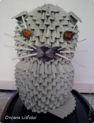 Этого котика зовут Умка.  фото 1