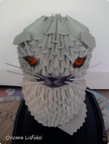 Этого котика зовут Умка.  фото 2