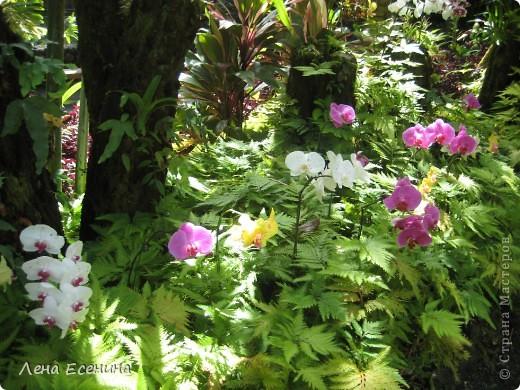 Леи - гирлянды цветов. Ими принято встречать приезжающих, конечно... за дополнительную плату. :) фото 29