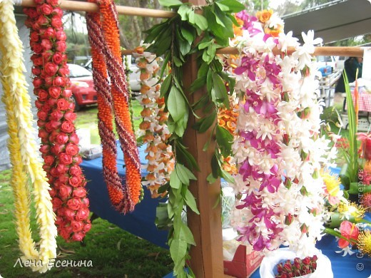 Леи - гирлянды цветов. Ими принято встречать приезжающих, конечно... за дополнительную плату. :) фото 1