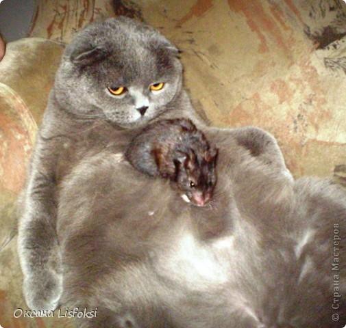 Этого котика зовут Умка.  фото 5