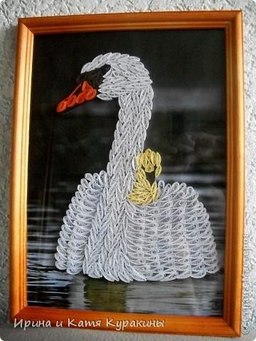 продолжаю тему лебедей фото 4