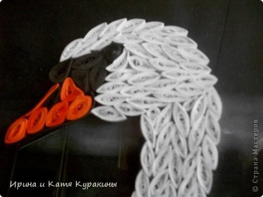 продолжаю тему лебедей фото 3
