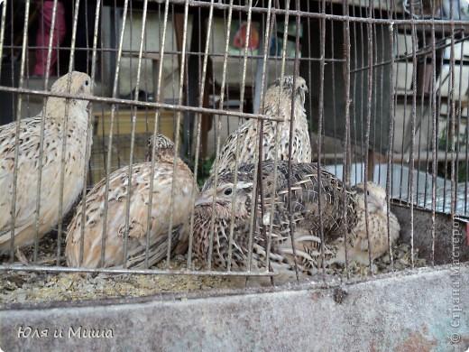 Чем поразил меня зоорынок Тбилиси, так это спокойствием. Никто не визжал, не скулил, не вырывался, не звал. Даже гомонливые птицы вели себя тихо. фото 14