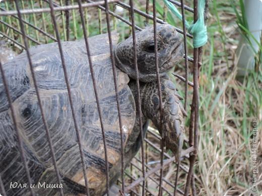 Чем поразил меня зоорынок Тбилиси, так это спокойствием. Никто не визжал, не скулил, не вырывался, не звал. Даже гомонливые птицы вели себя тихо. фото 17