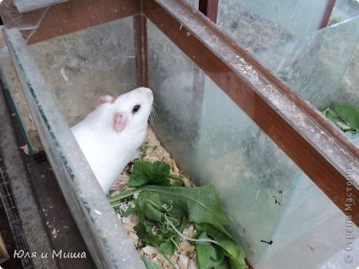 Чем поразил меня зоорынок Тбилиси, так это спокойствием. Никто не визжал, не скулил, не вырывался, не звал. Даже гомонливые птицы вели себя тихо. фото 19
