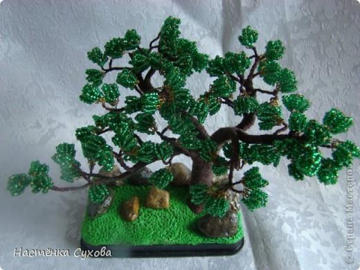 Это дерево я сделала папе на день рождение. Высота дерева 12см. Основание: пластмассовая крышка из под коробки, залитая гипсом и прилеплен зелёный пластик, с верху украшено камнями, и покрыто лаком.