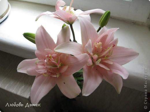 Вот и пришла долгожданная весна!Пришла с радостью,с нежностью, с чудесными запахами и разноцветьем! фото 11