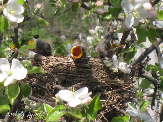 Вот и пришла долгожданная весна!Пришла с радостью,с нежностью, с чудесными запахами и разноцветьем! фото 2