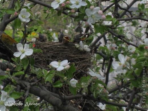 Вот и пришла долгожданная весна!Пришла с радостью,с нежностью, с чудесными запахами и разноцветьем! фото 3