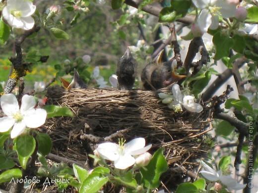 Вот и пришла долгожданная весна!Пришла с радостью,с нежностью, с чудесными запахами и разноцветьем! фото 4
