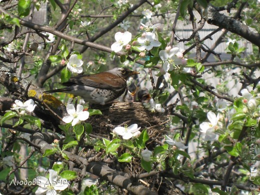 Вот и пришла долгожданная весна!Пришла с радостью,с нежностью, с чудесными запахами и разноцветьем! фото 5