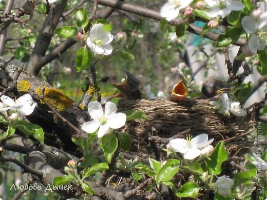Вот и пришла долгожданная весна!Пришла с радостью,с нежностью, с чудесными запахами и разноцветьем! фото 6
