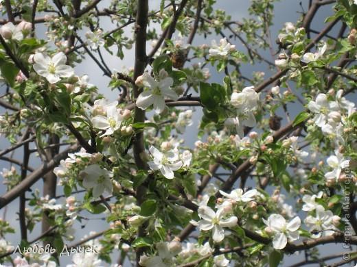 Вот и пришла долгожданная весна!Пришла с радостью,с нежностью, с чудесными запахами и разноцветьем! фото 1